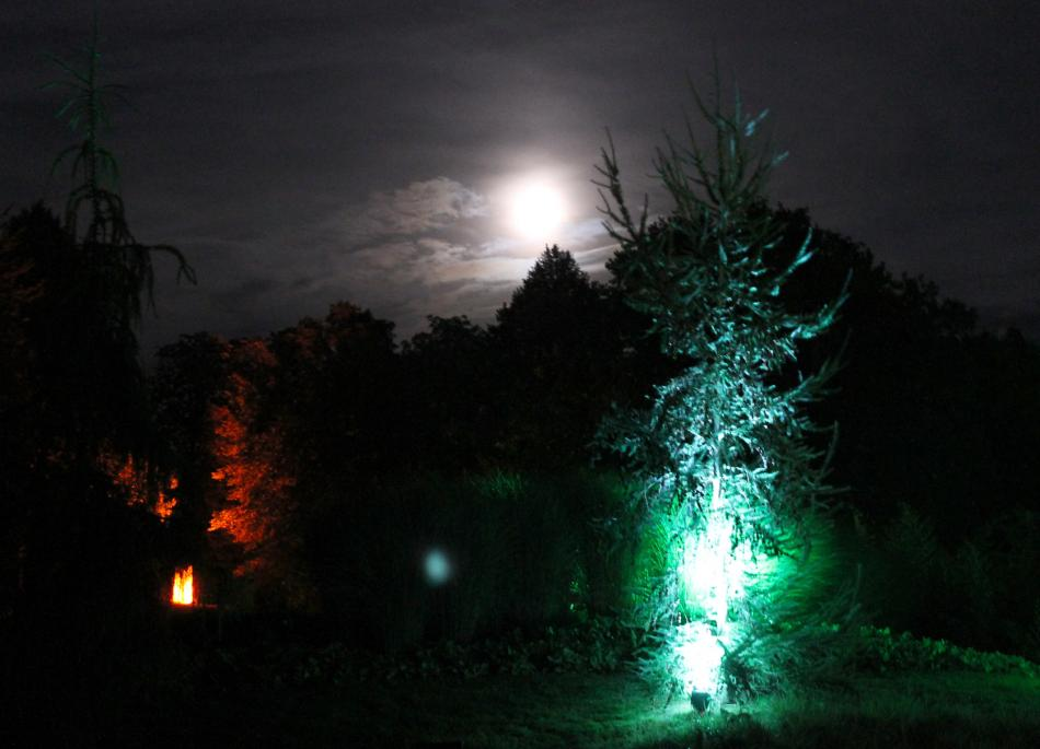 Licht im Park