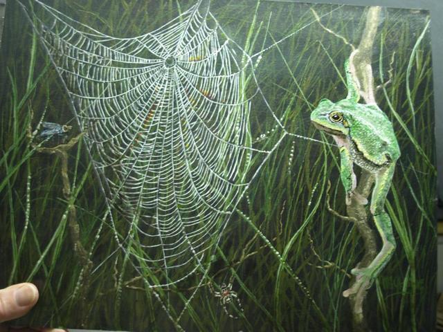 Spinne, Netz,Fliege und Frosch