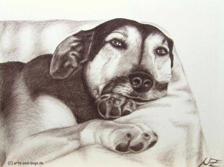 Dogs Eyes III