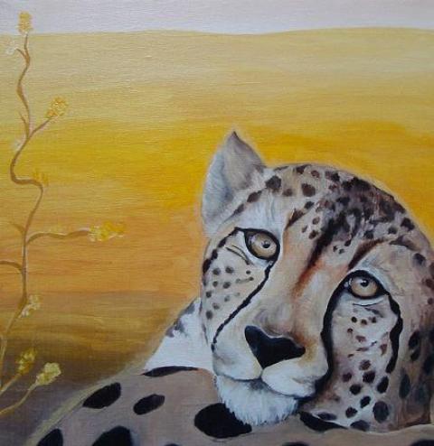 Gepardenauge