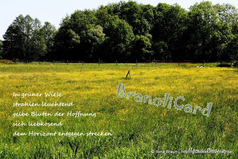 017 gelbe Blüten
