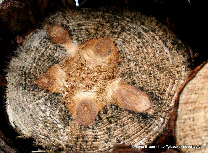 Turtle Tree