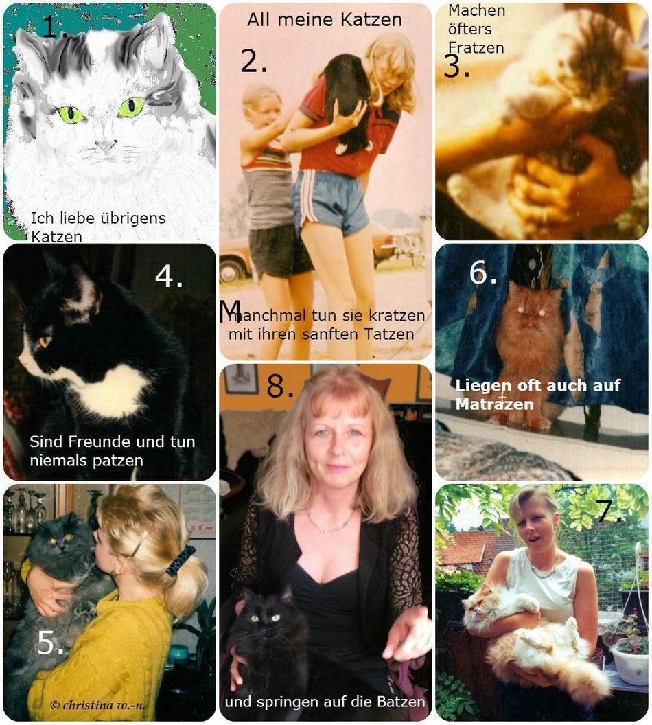 Collage All meine Katzen