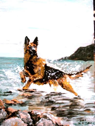 Schäferhund im Wasser