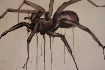 Spinne vergrößert