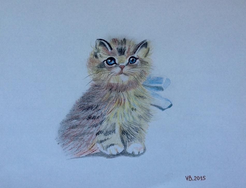Baby Katze mTom