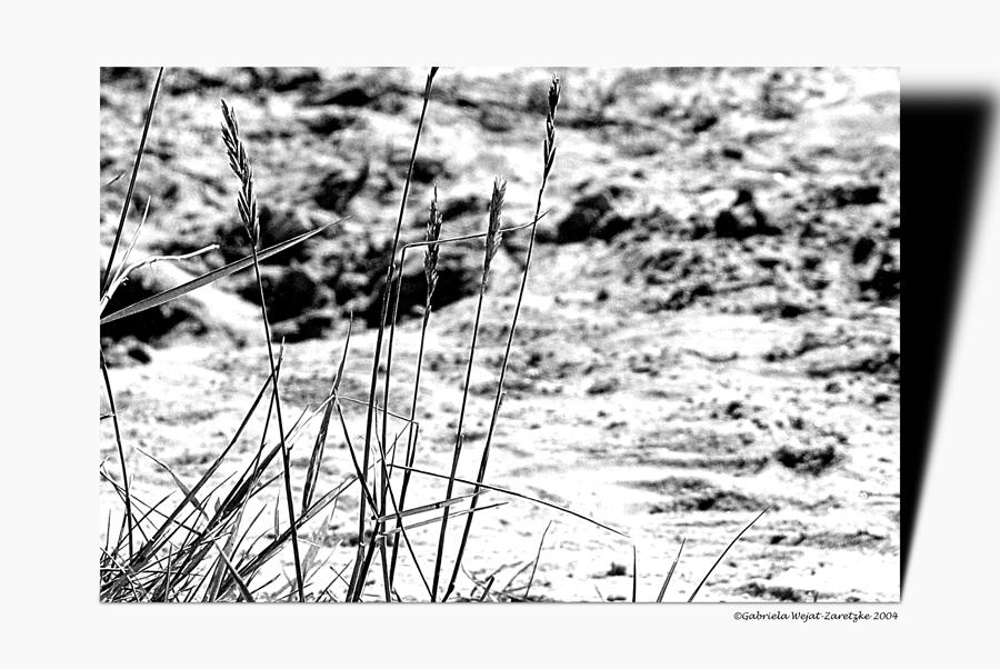 Nordseeimpressionen Strand