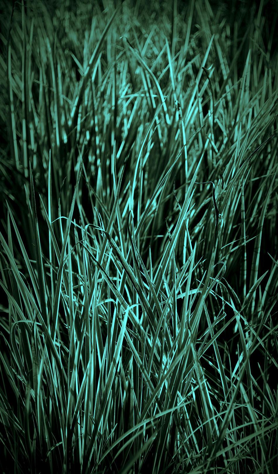 Nachtgräser