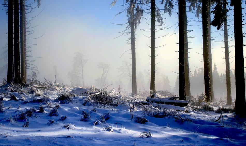 Letzter Schnee im Winterwald