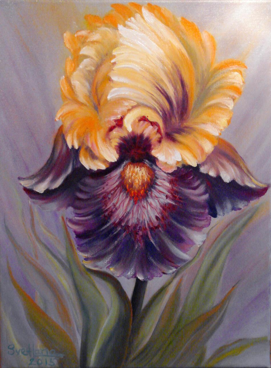 Magnificent Iris