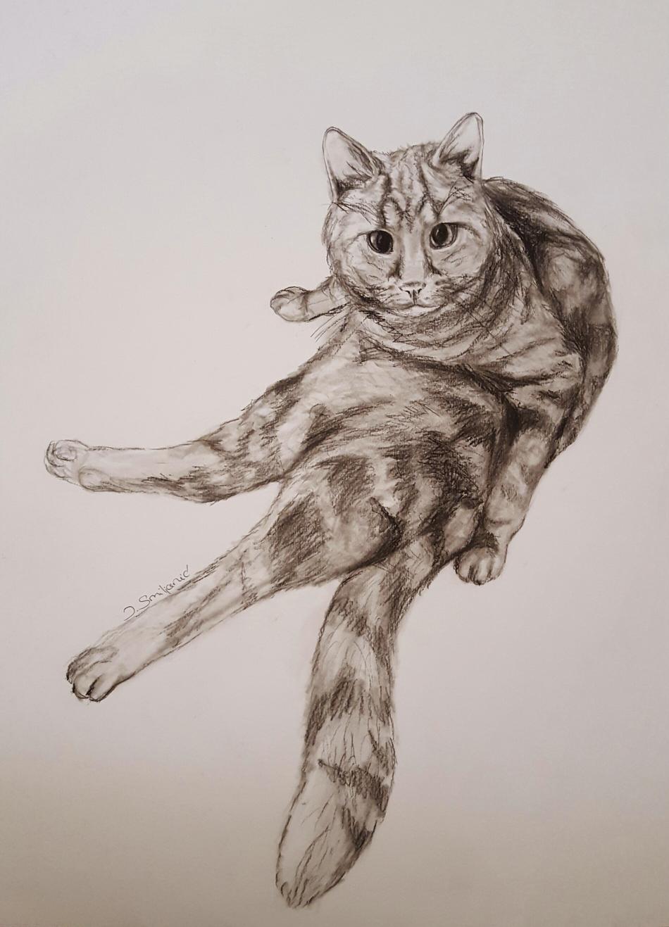 Katzen Yoga
