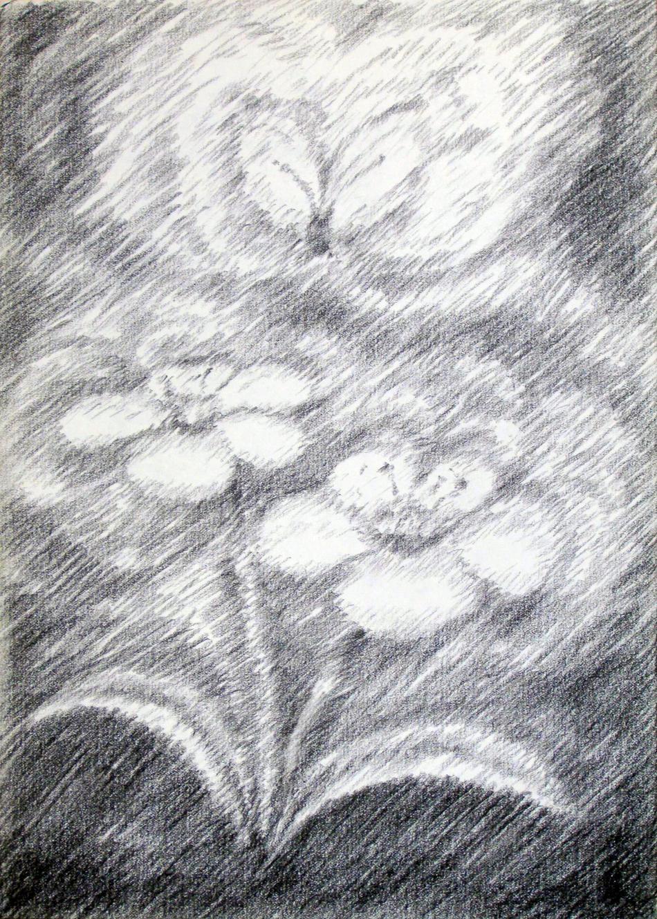 Blüte und Schmetterling