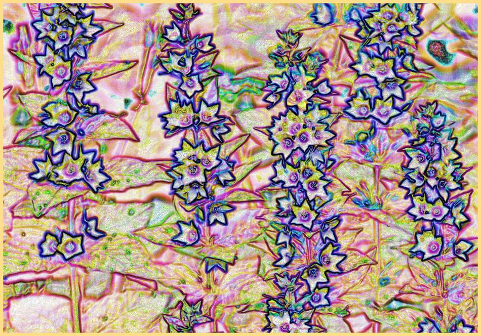 fleurs de cire bleu
