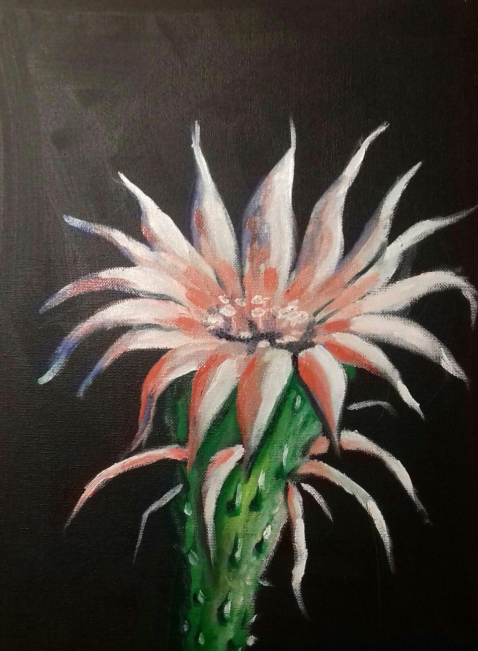 IngrIdee Bergmanns Kaktusblüte