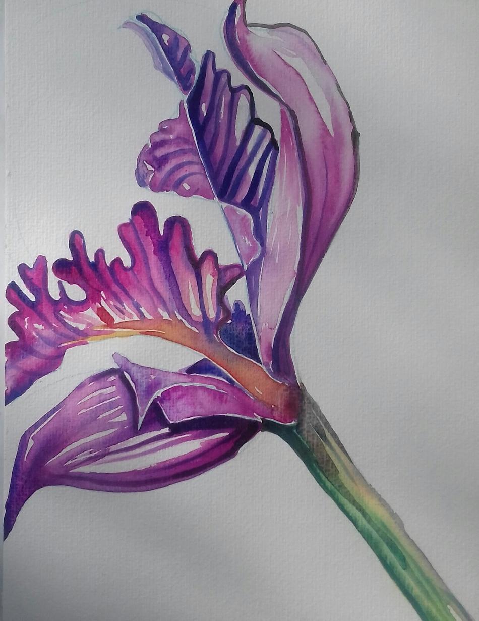 Farbenspiel Iris