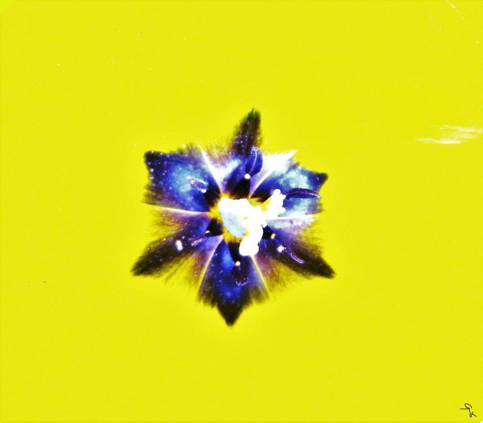 STAR T1