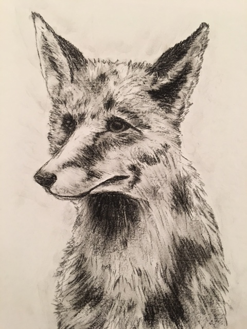 Fuchs im Portrait