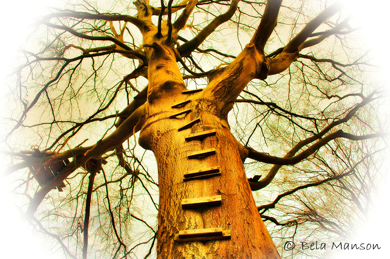 The Ladder (natural)
