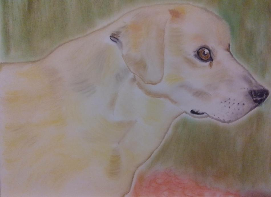 Hunde-Portrait 2