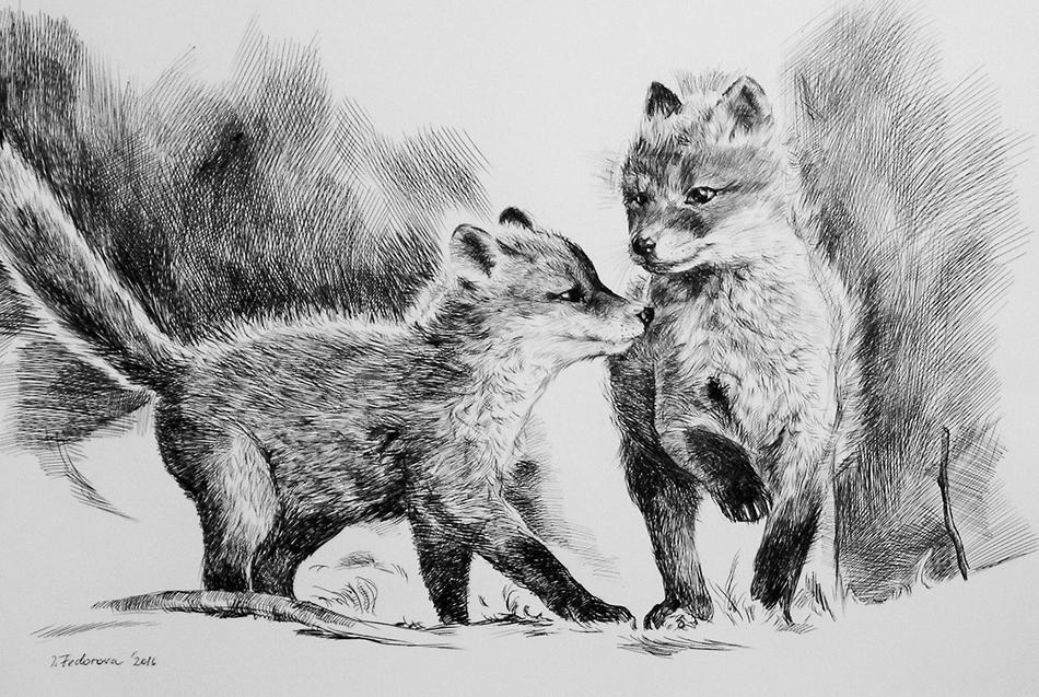 Jungen Fuchsen