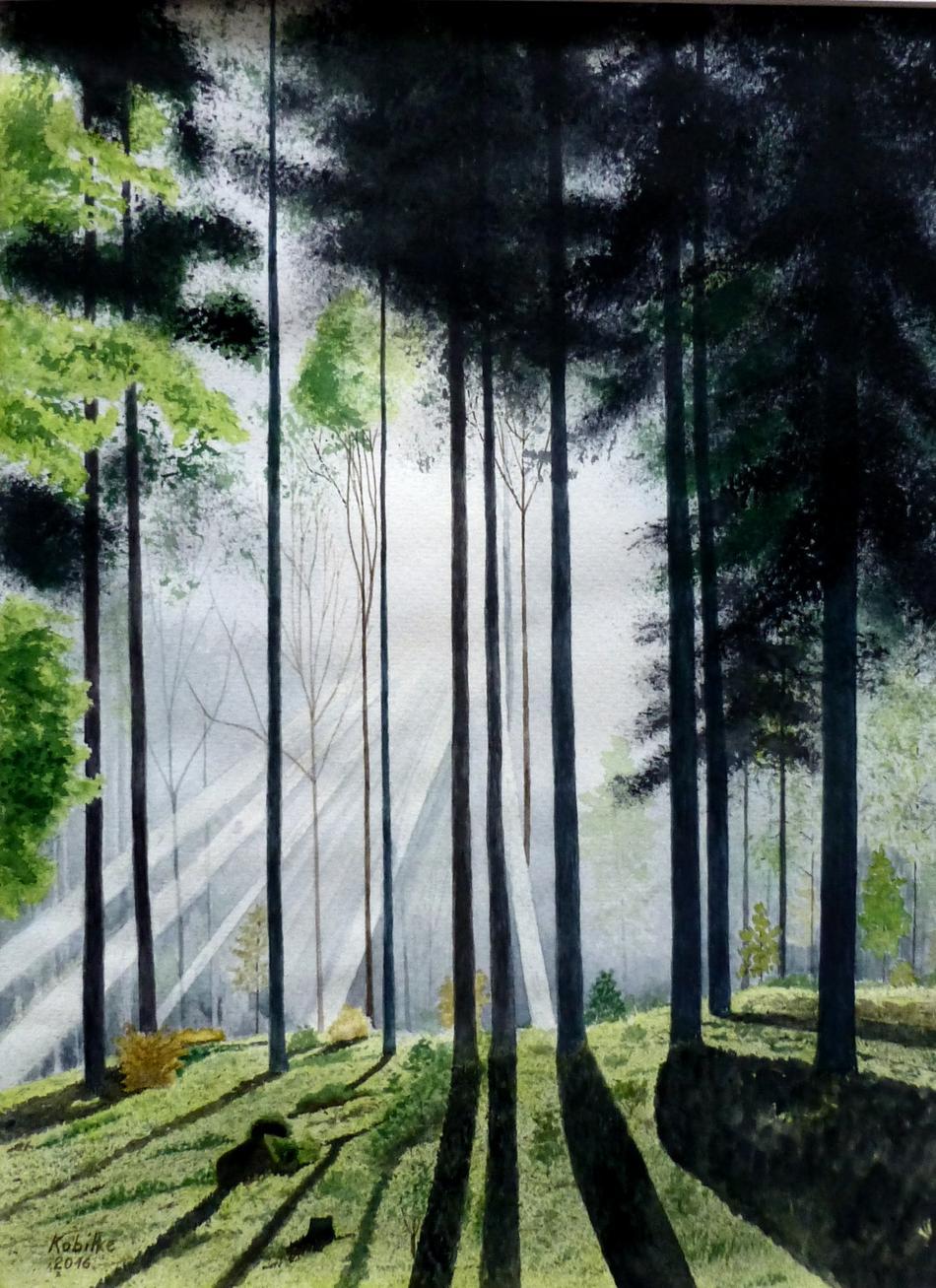 Waldmorgenlicht