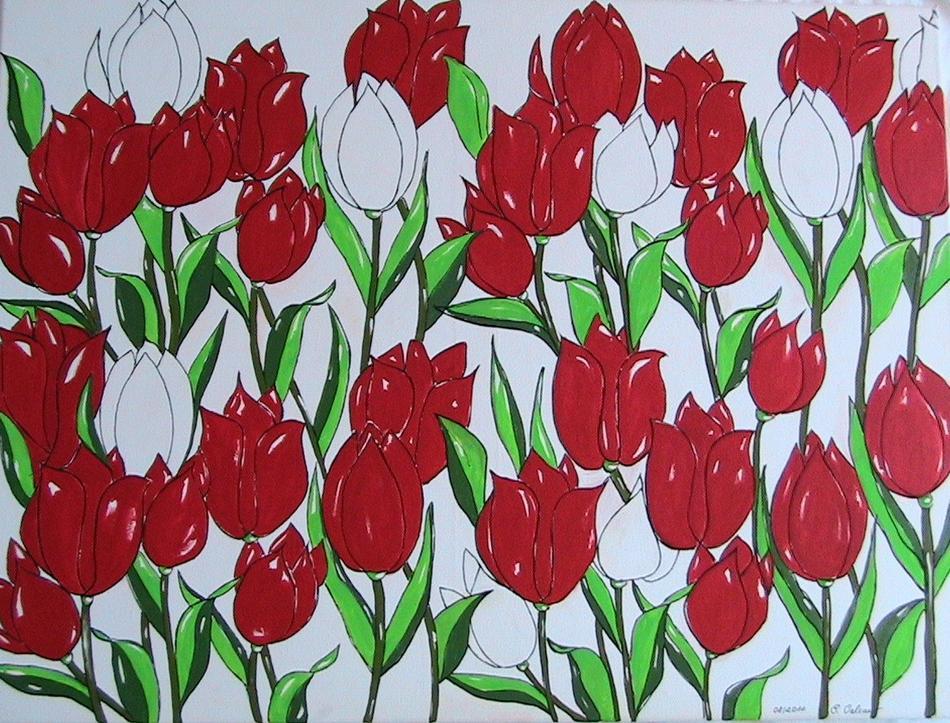 Tulpen rot/weiss