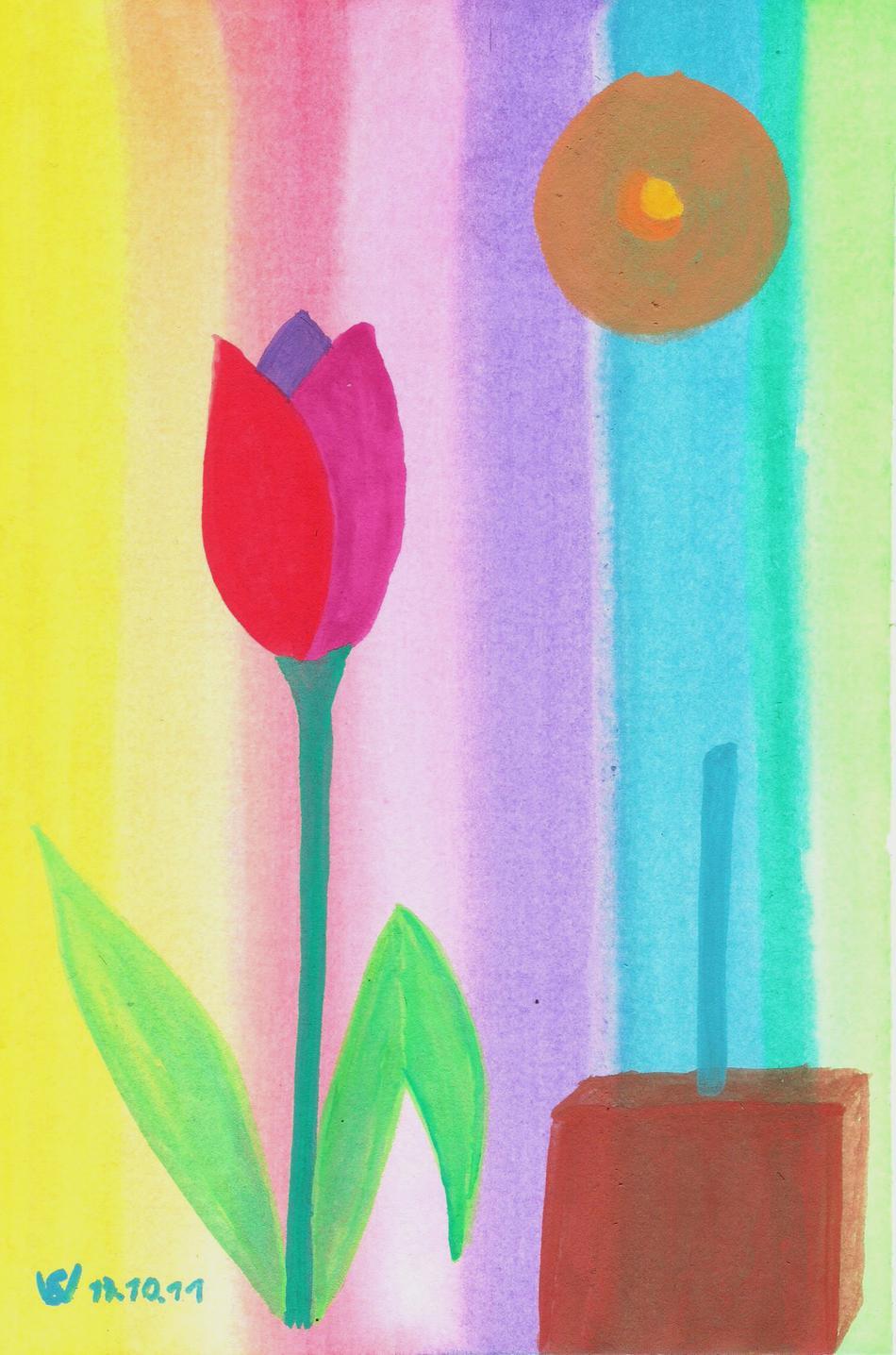 Tulpe Regenbogen