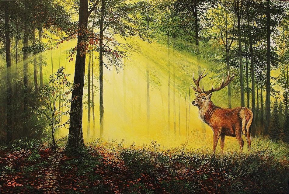 Hirsch am Morgen