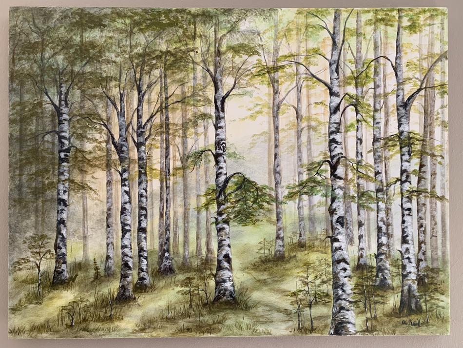 Birkenwald in der Morgendämmerung