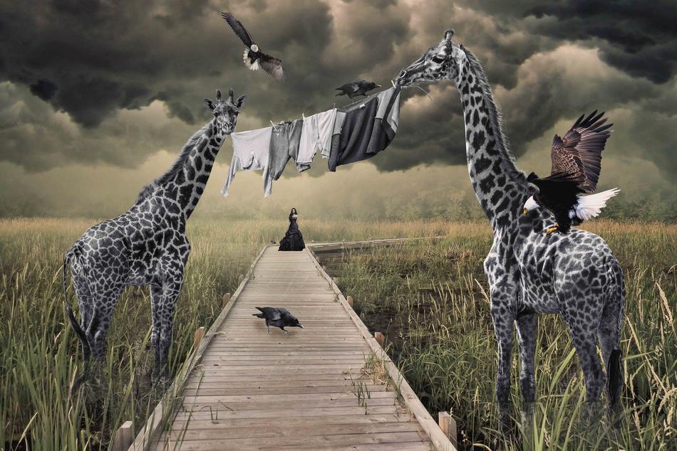 Giraffenwäsche