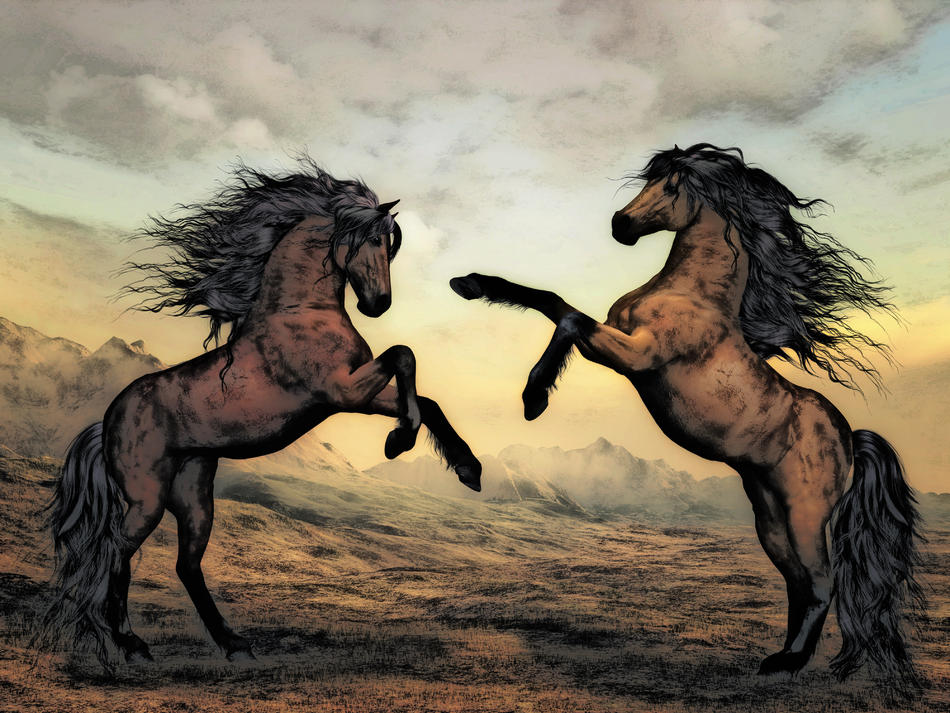 Pferde beim Revierkampf