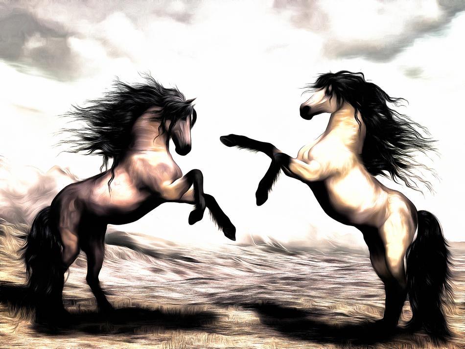 Pferde Revierkampf