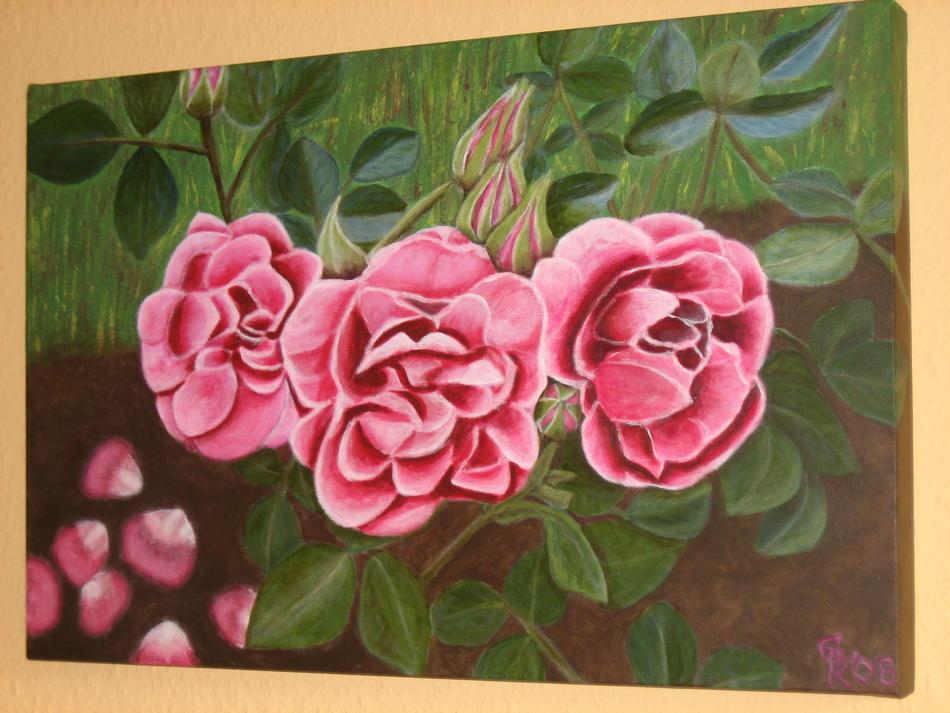 Gartenrosen in Hilden
