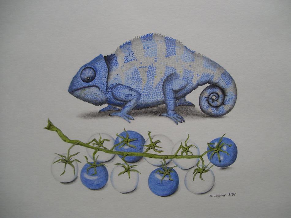 Blaues Chamäleon