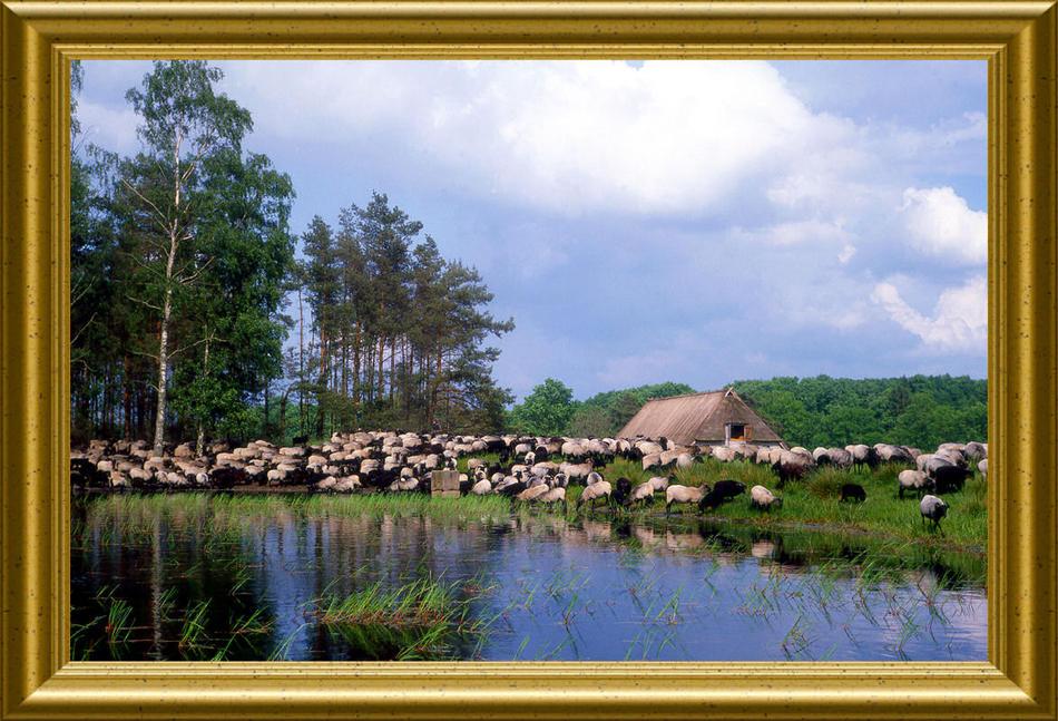 Idylle in der Lüneburger Heide
