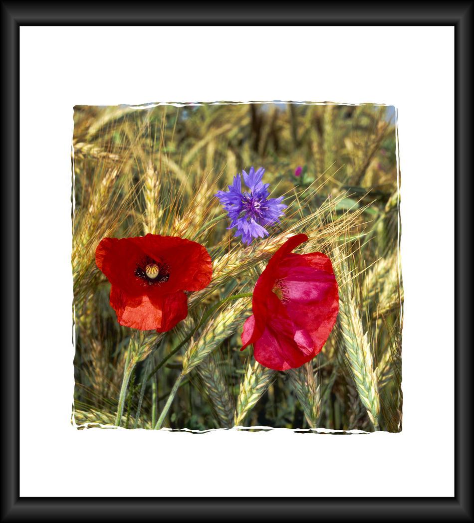 Blumen am Kornfeld