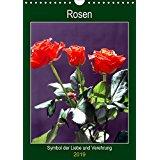 Rosen - Symbol der Liebe und Verehrung