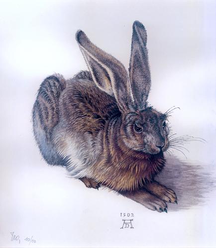 Feldhase nach A. Dürer