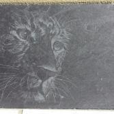 Gepard auf Schiefer