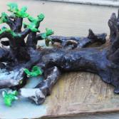 der gestürzte Baum ist nicht tot
