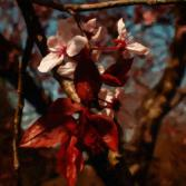 Spring-Art