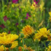 Wacker das Blumenfeld