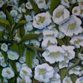 Frühling in Weiss