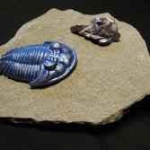 Trilobit & Crystalstone