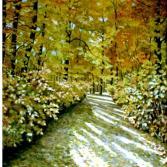 Herbstsonne im Pfälzer Wald