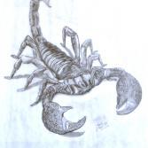 Skorpion (Kadée 2009 / KVN 462) Bleistiftzeichnung KVN 462