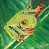 Rotaugenfrosch