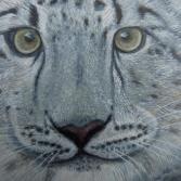 Nahaufnahme meines S. - Leoparden