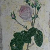 ROSE rosa  antiquiert