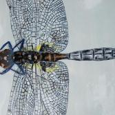 Libelle  Ausschnitt